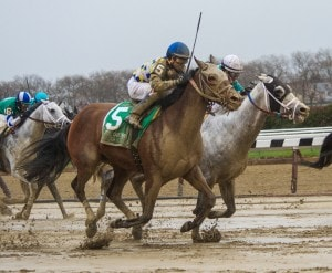 OZONE PARK, NY - APRIL 9: Salutos Amigos, ridden by Cornelio Velasquez pokes a head in front of Calculator en route to winning the Carter Handicap at Aqueduct Racetrack on April 9, 2016 in Ozone Park, NY. (Photo by Sophie Shore/Eclipse Sportswire/Getty Images)